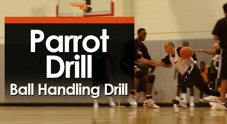 parrot-drill